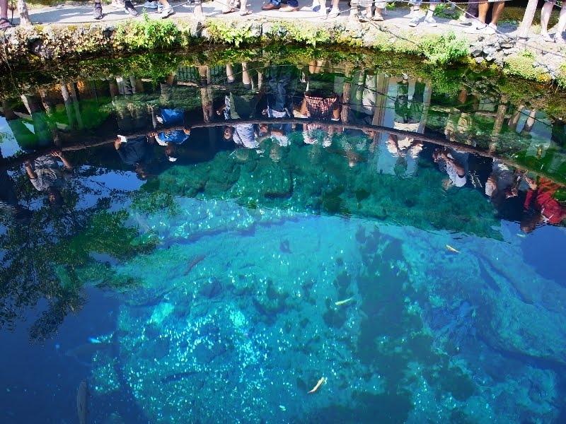 忍野八海 中池