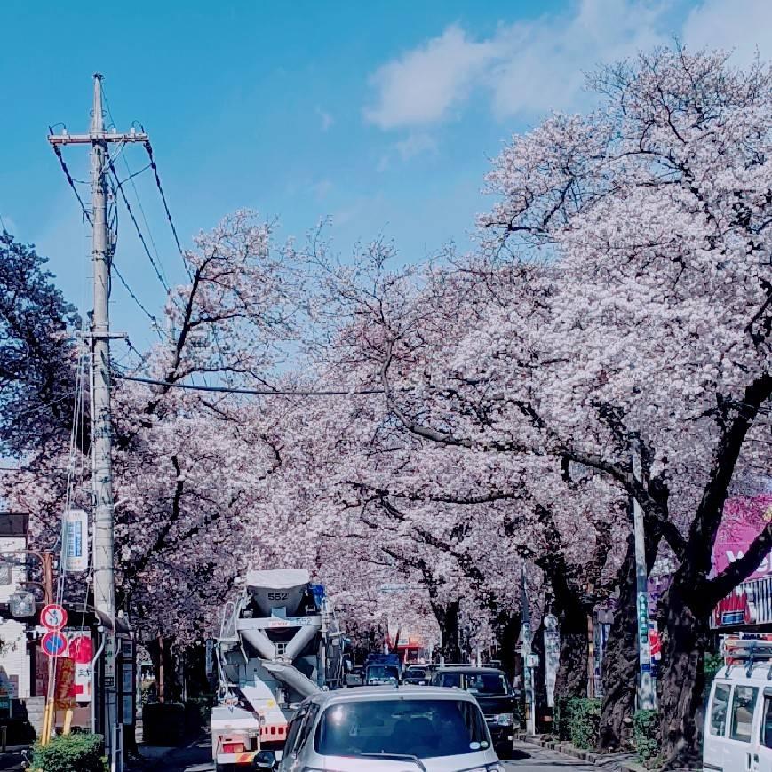 矢川駅前の桜♪
